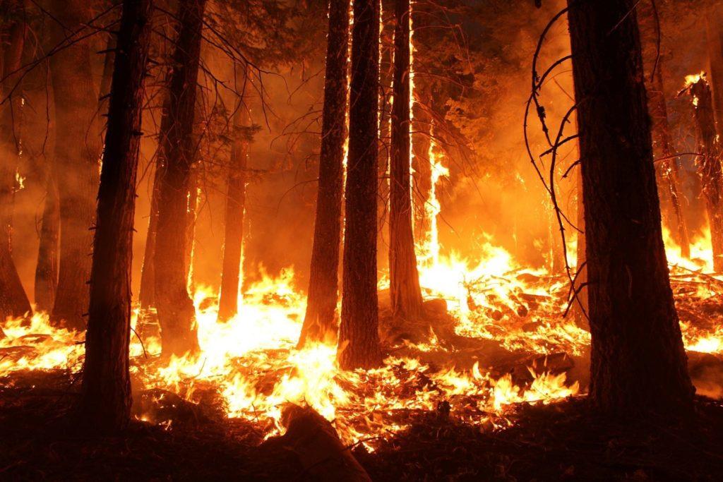 Auf dem Bild sieht man einen brennenden Wald.